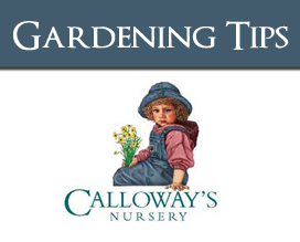 Timber Ridge HOA - Calloway's Gardening Tips